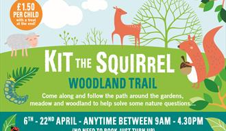 Kit the Squirrel Woodland Trail
