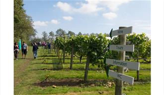 Warden Abbey Vineyard